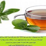 چای زیتون و فواید بی نظیر آن